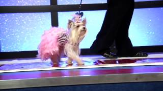 Pet design Fashion show